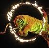 Цирки в Бегичевском