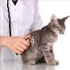 Ветеринарные клиники в Бегичевском
